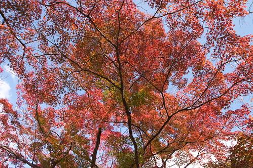 【写真】2012 紅葉 : 長岡天満宮/2020-10-09/IMGP6556