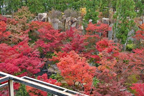 【写真】紅葉 : けいはんな記念公園