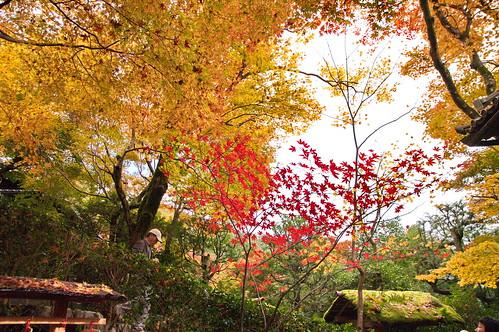 【写真】2012 紅葉 : 寂光院/2020-08-29/IMGP6299