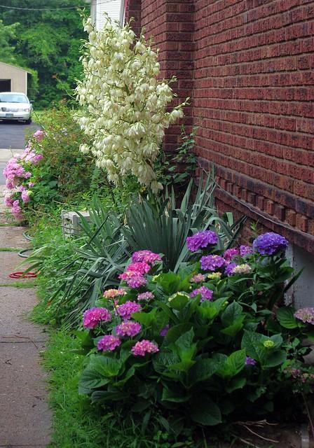 My side garden