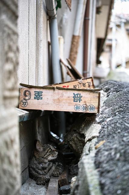 Onomichi Cat #002