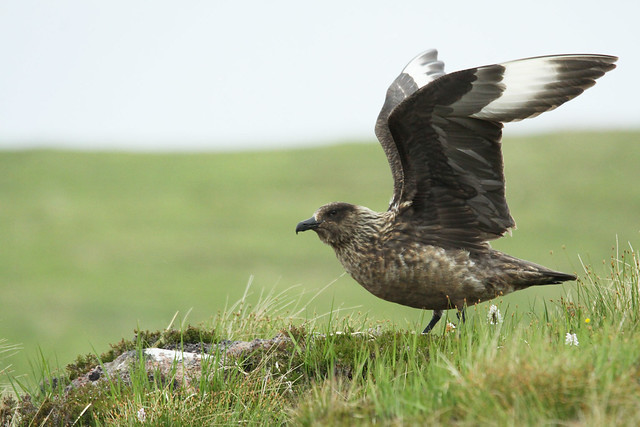 Bonxie- Flying High