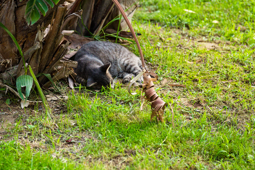 2013-Spain-Benidorm-CatsParadise-003