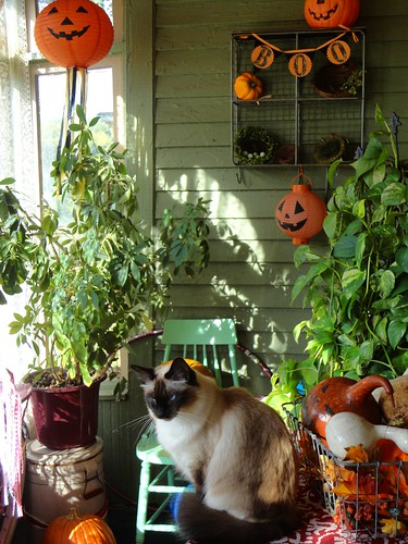 frannie on porch