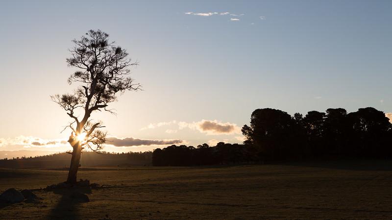 Trees_NSW,Austrailia_G.LHeureux--0582