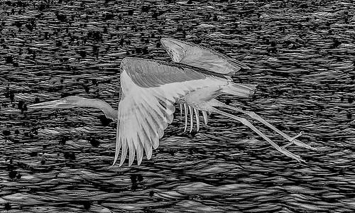 Heron Launching Series: No. 7-3