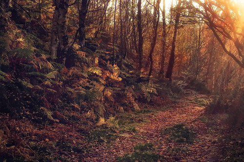 autumn peakdistrict sheffield lodgemoor foxhaggnaturereserve sonyslta55v