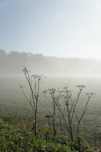 131124 Nebel