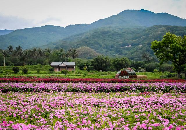 Flower field, East Rift Valley