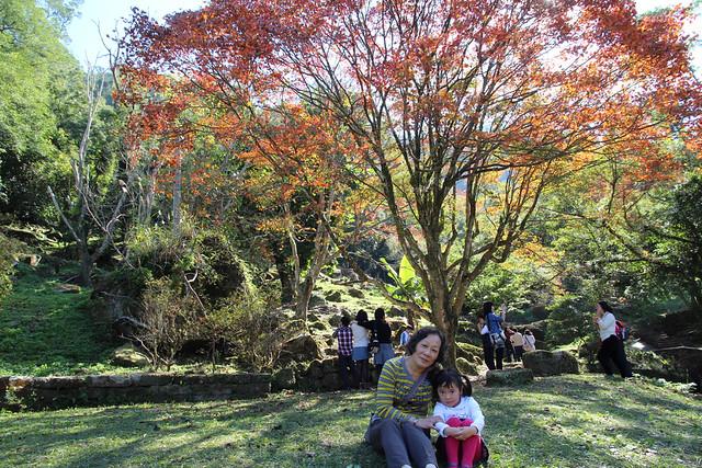 石門水庫楓葉