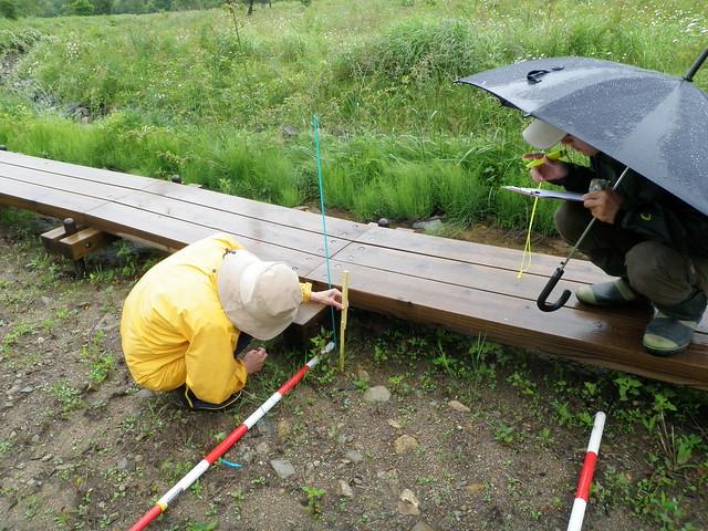 植物の高さを測る.