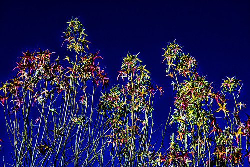 colorful plants by joeeisner
