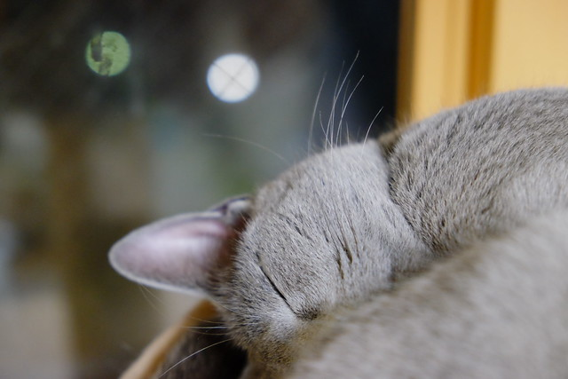 He is sleeping