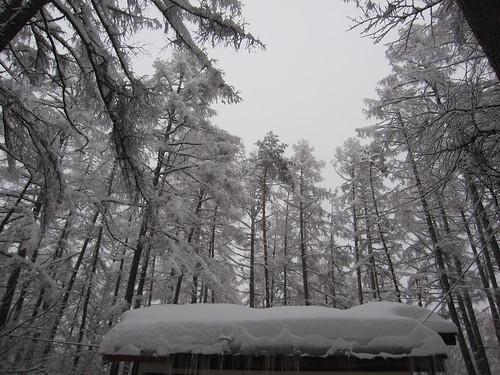5時頃雪かきをして空を見上げると・・・ by Poran111