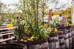 Spring in a barrel