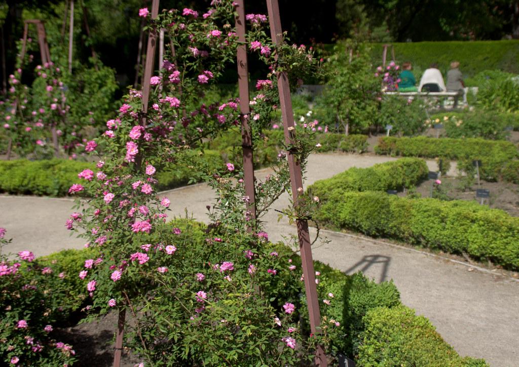 Rosaleda del Jardín Botánico