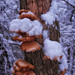 "Small photo of ""Wild Mushrooms"""