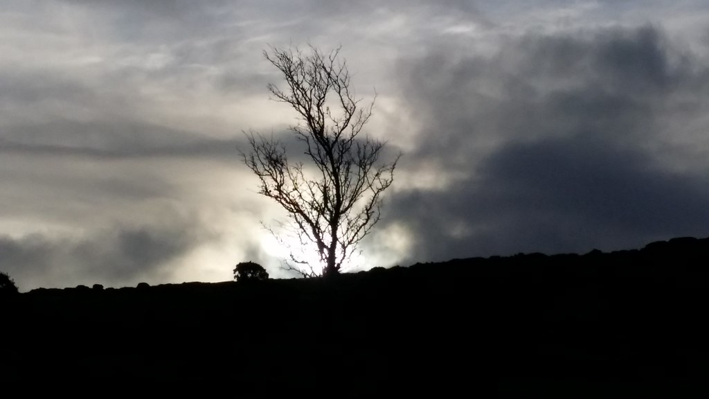 #sh #dartmoor