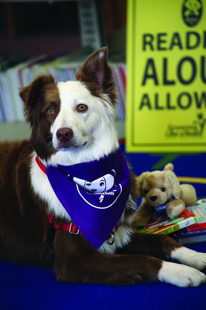 Norman West Therapy Dogs