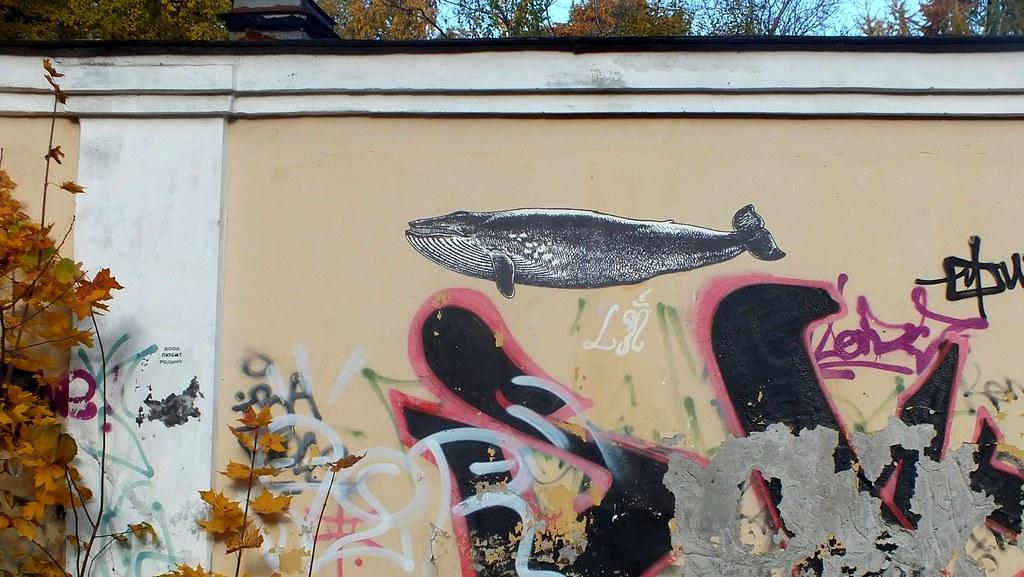 Whale in SPb