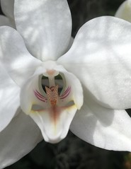 MoBot Orchid 2015-024
