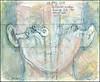 Vestibular system: looking for the inner ear. 28 may, 2016.