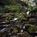 Thomason Foss, North Yorkshire Moors by alasdair.matthews