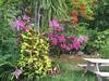 #gardengoals #garden #orchids #flowers