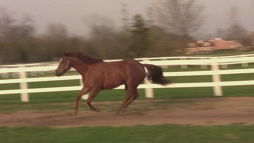 My horses, Barney & Cookie running