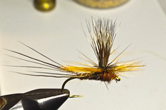 The Bonbon, Ameletus Dry Fly?