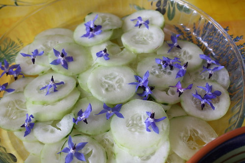 Cucumber with borage flowers