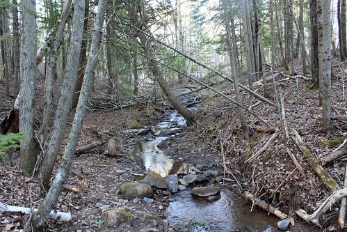 nature landscape outdoors wildlife trail joannelockwood jogophoto crowleyfarmroadtrail
