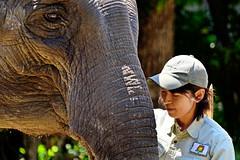Indian Elephant and Girl Zookeeper of  Yokohama Zoological Gardens / ズーラシアのインドゾウと飼育係のお姉さん