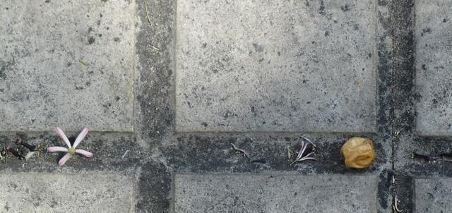 Bolita arrugada y flor