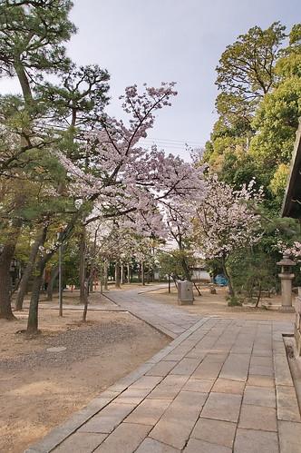 【写真】2013 桜 : 御香宮神社/2019-10-26/IMGP9739