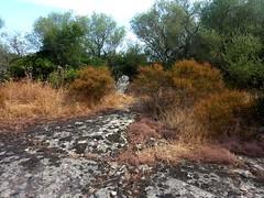 La statue à l'extrémité d'une sorte d'aghja à l'Est le long du chemin démaquisé