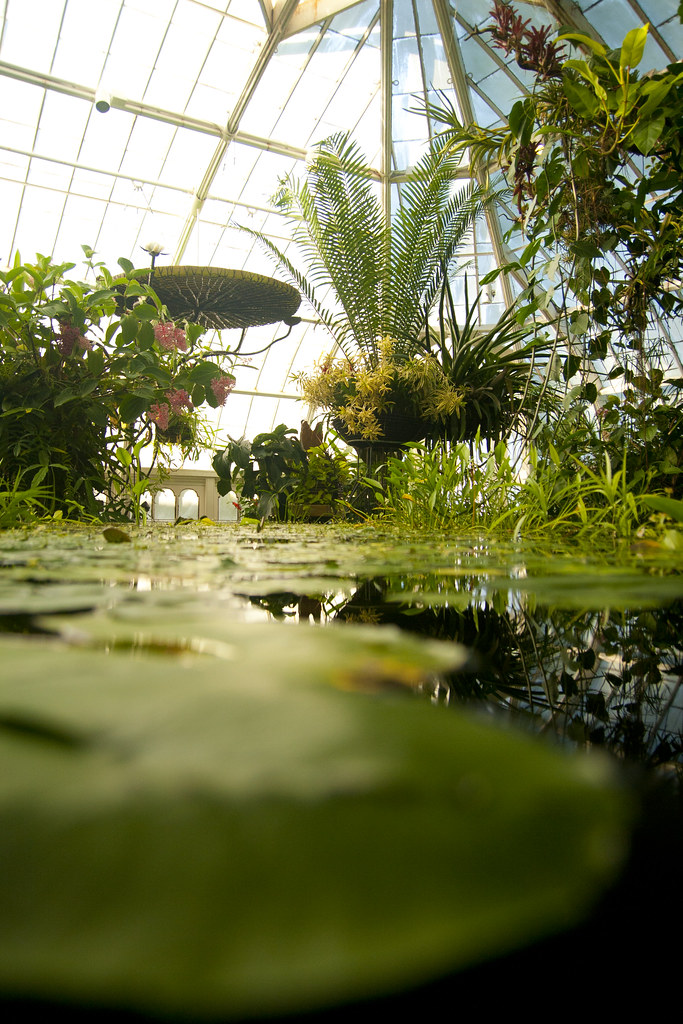 Conservatory waterlily wide