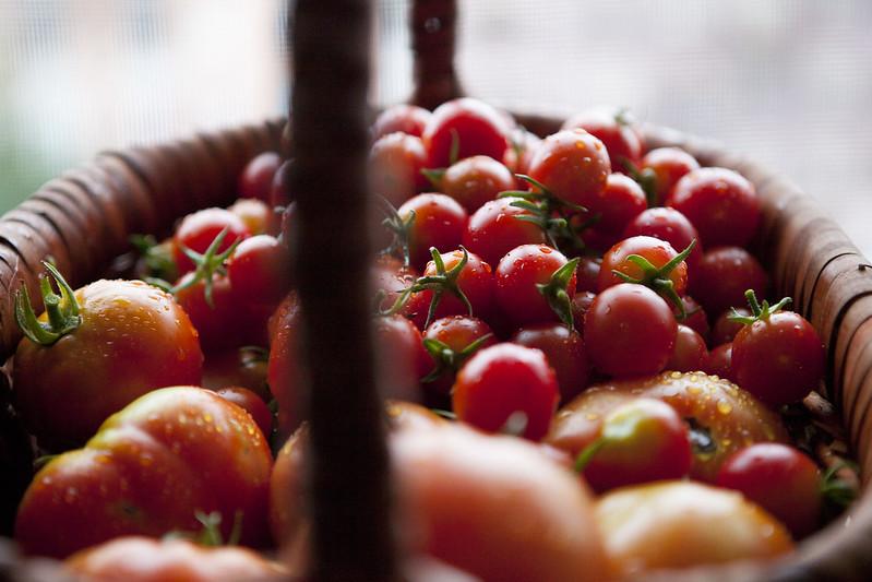 Homemade Tomato PasteIMG_3618