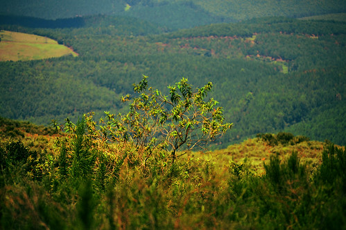 africa trip travel green tourism nature photoshop landscape southafrica nikon scenery view natureza greenery canyons mpumalanga africadosul panoramaroute d5100