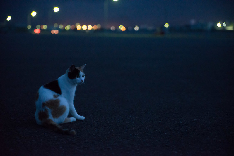 ねこin the dark