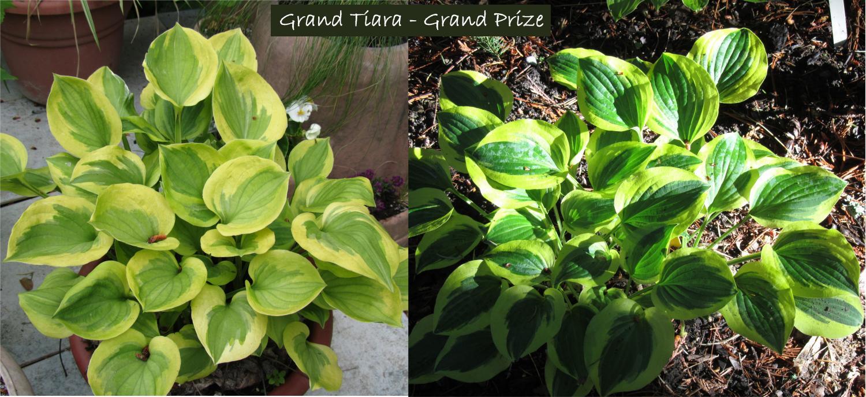 Grand Prize - Grand Tiara 6-7-12 (86)