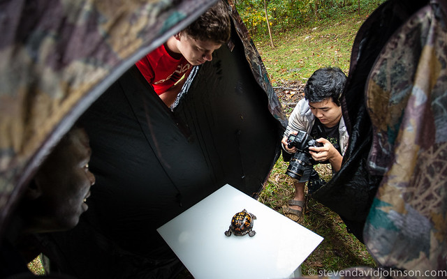EMU students photograph an Eastern Box Turtle using Meet Your Neighbours whitebox techniques