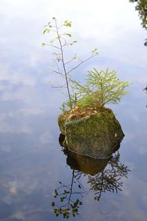 Herbstliche Impressionen im Harz