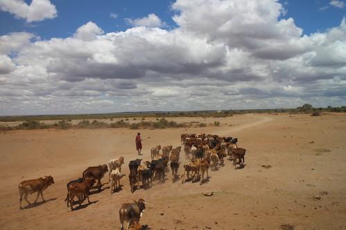 肯亞Nairobi National Park 和 Amboseli National Park兩個國家公園之間是野生動物的遷徙路徑,同時人類也在此放牧及農耕