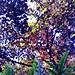 #nature #TagsForLikes #sky #sun #summer #beach #beautiful #pretty #sunset #sunrise #blue #flowers #night #tree #twilight #clouds #beauty #light #cloudporn #photooftheday #love #green #skylovers #dusk #weather #day #red #iphonesia #mothernature by Jose Daniel Castillo