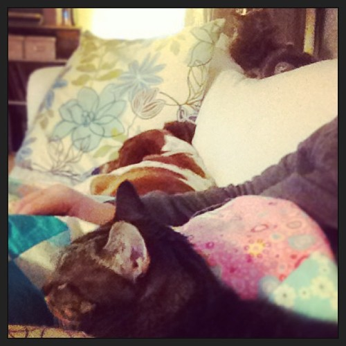 I've got a lot of help hand-quilting.
