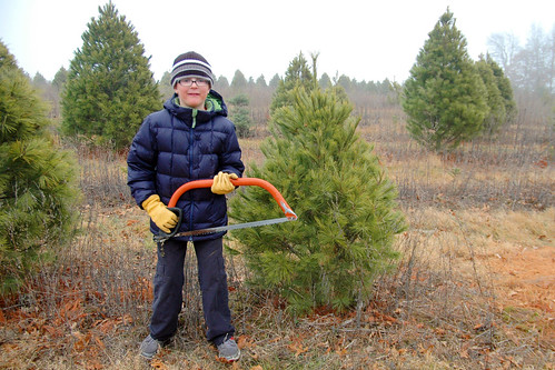 day 3073: christmas tree hunting on a not-so-snowy ridge. IV.