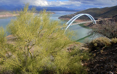 Theodore Roosevelt Bridge with Palo Verde (Parkinsonia florida) , Arizona