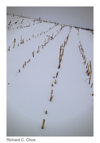 Field of Snow1 (2014, 3.4) by rchoephoto