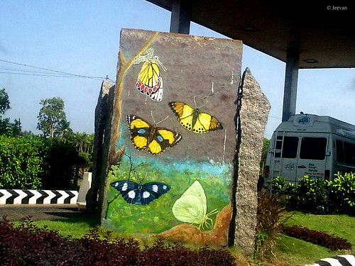 Rock painting on Butterflies